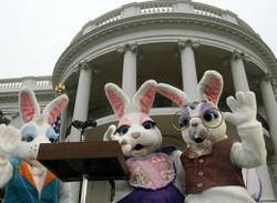 White house bunnies