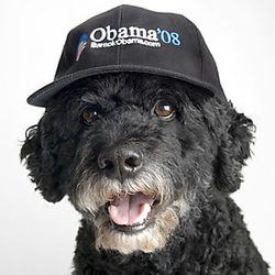 Porties for Obama