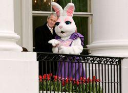 Bush & bunny